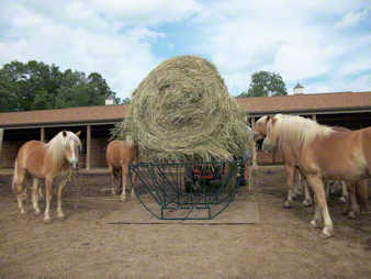 Haflingers waiting for their round bale of hay