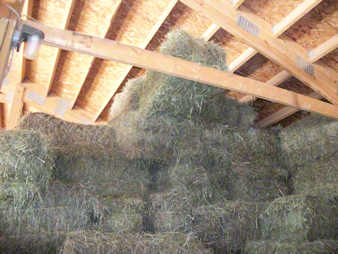 Square hay bales stored dry in our barn